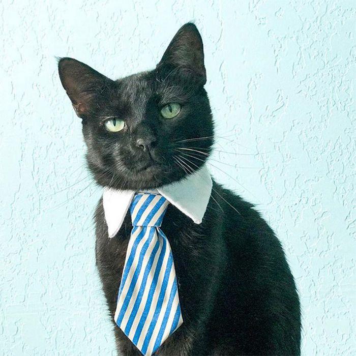 21 gatos com gravatas 12