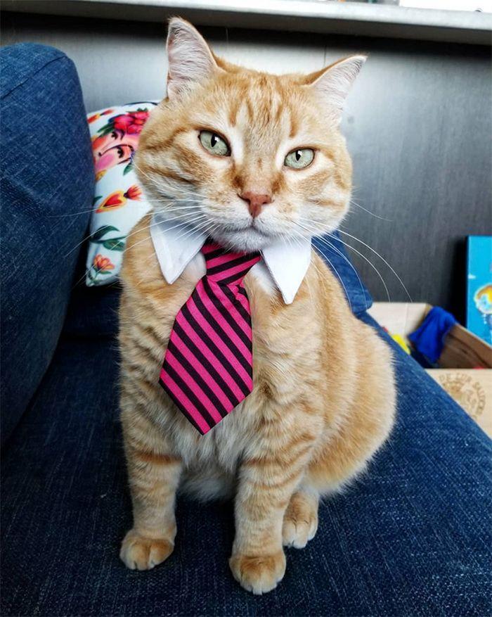 21 gatos com gravatas 13
