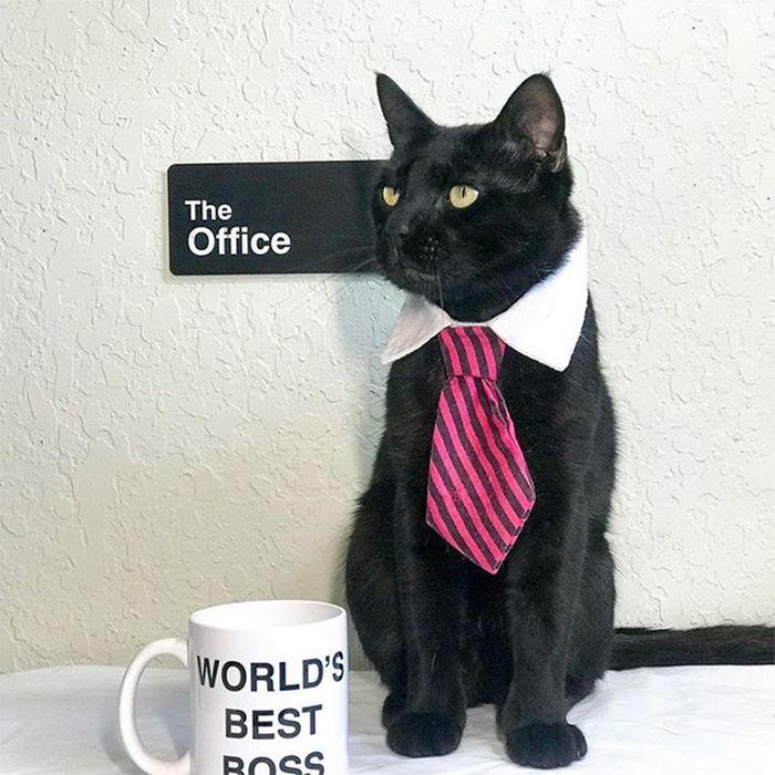 21 gatos com gravatas 15