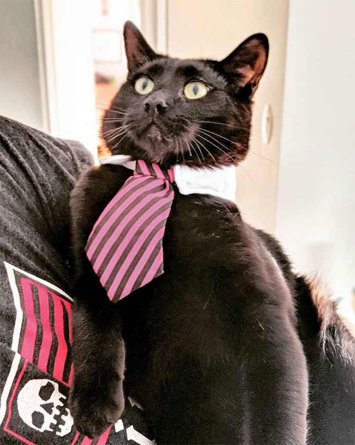 21 gatos com gravatas 16
