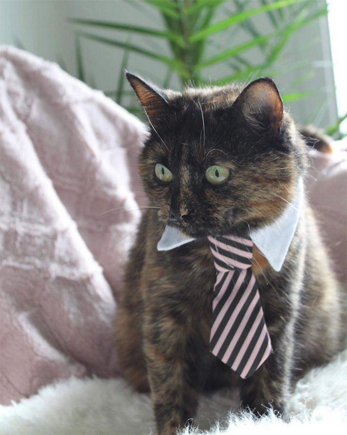 21 gatos com gravatas 19