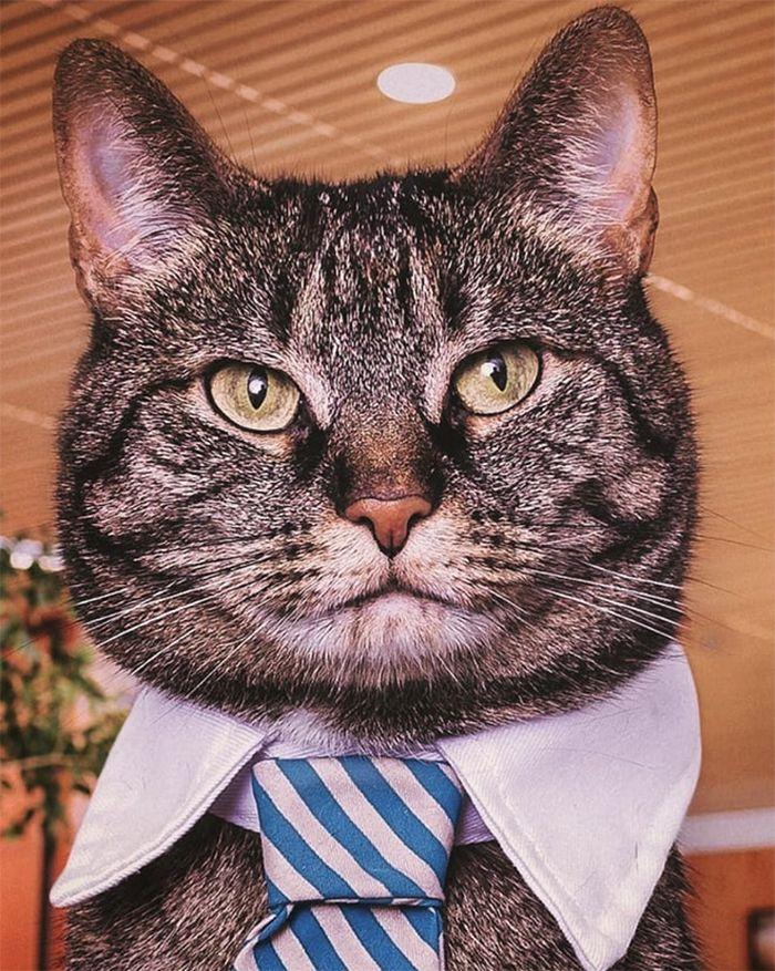 21 gatos com gravatas 20