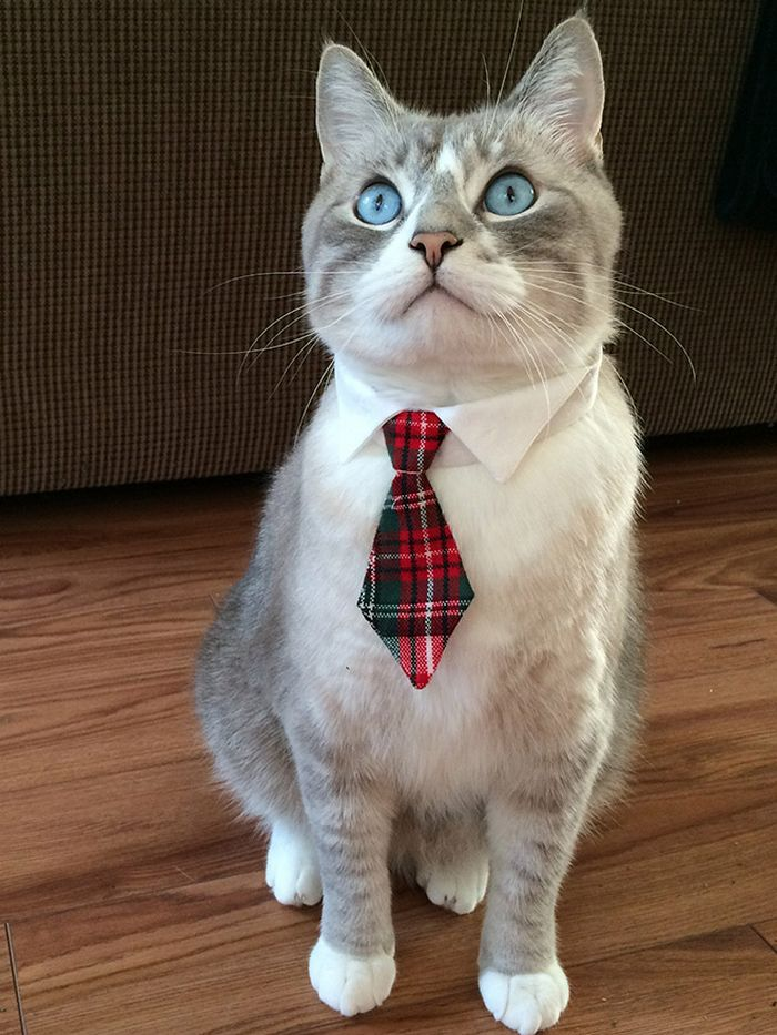 21 gatos com gravatas 21
