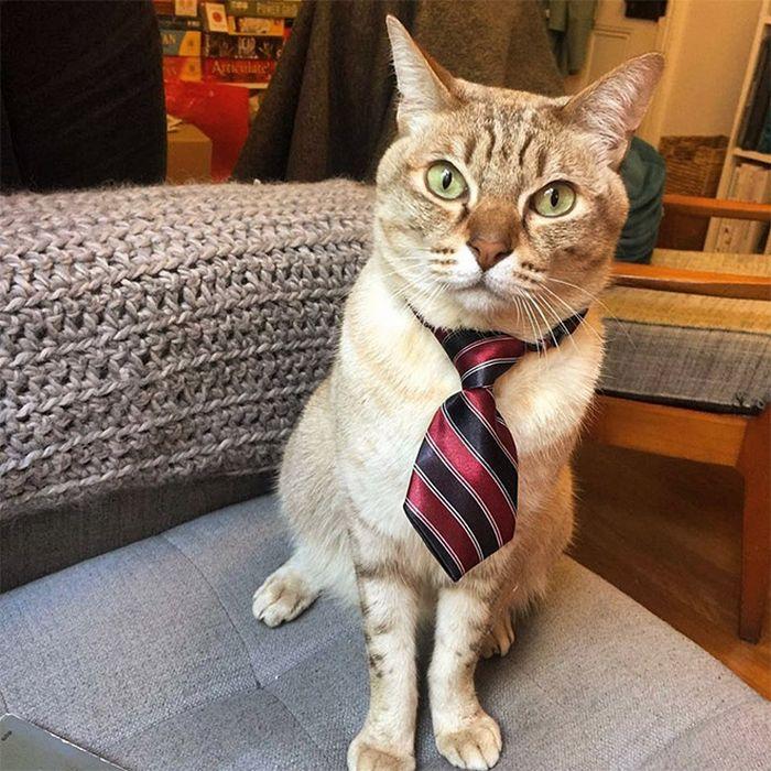 21 gatos com gravatas 22