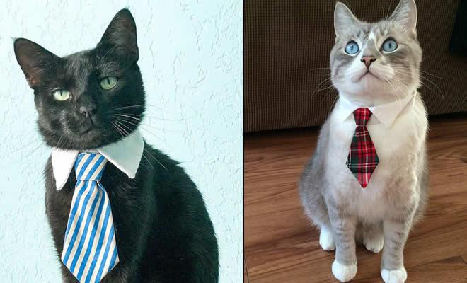 21 gatos com gravatas 1
