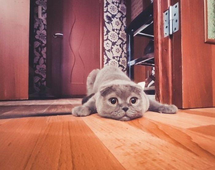 Se você tem gatos, você vai entender muito bem essas 10 situações 6