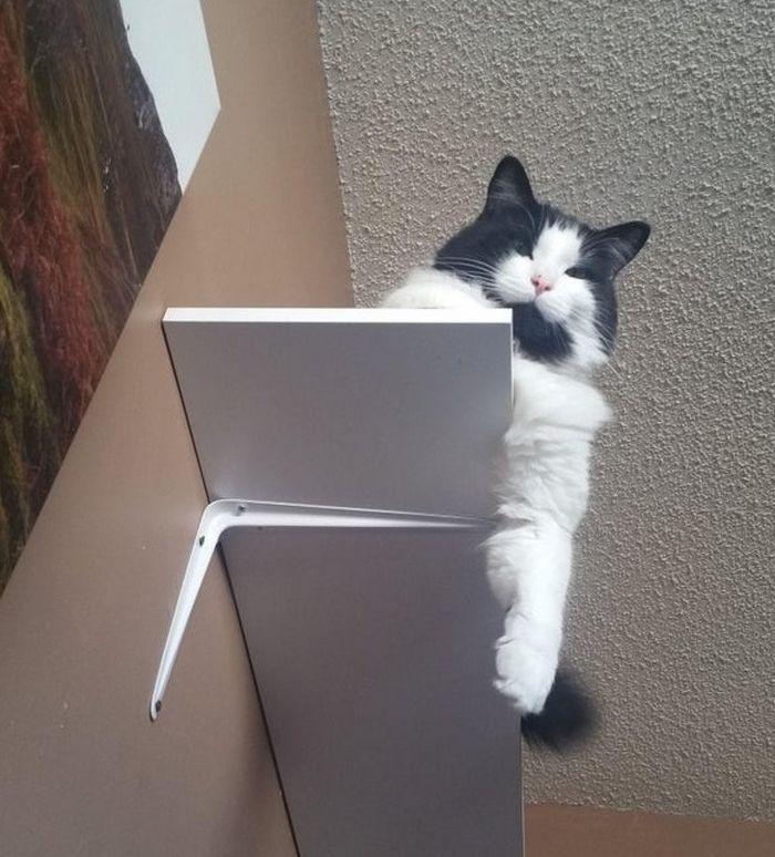 Se você tem gatos, você vai entender muito bem essas 10 situações 9
