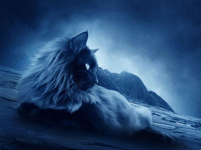 Seu gato pode ser vidente? 2