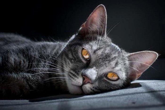 Seu gato pode ser vidente? 3
