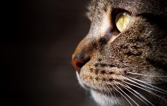 Seu gato pode ser vidente? 4