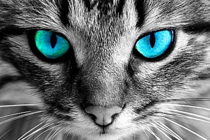 Seu gato pode ser vidente? 5