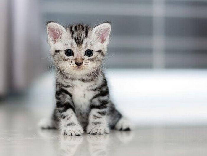 Seu gato pode ser vidente? 6