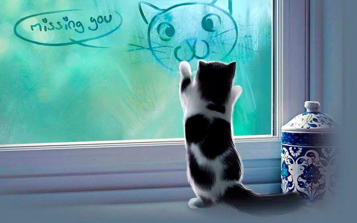 Seu gato pode ser vidente? 7