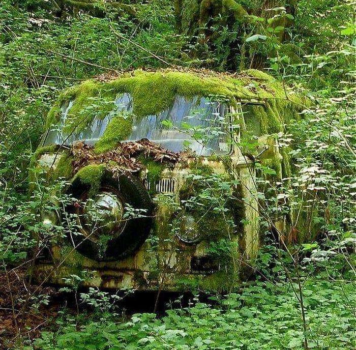 20 vezes que a natureza fez o mundo se curvar diante dele 12
