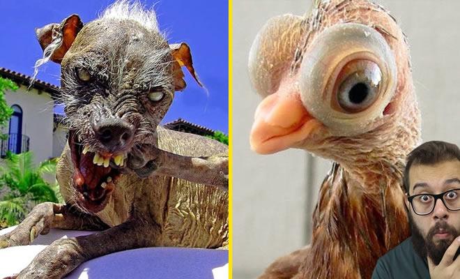 5 animais estranhos que parecem de mentira 7