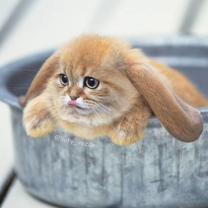 Gatos, eles estão por toda parte. 30 fotos que comprovam isso 23