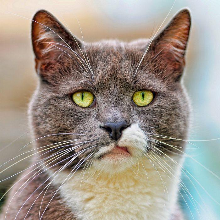 21 gatos que estão te julgando sem dó e nem piedade 2