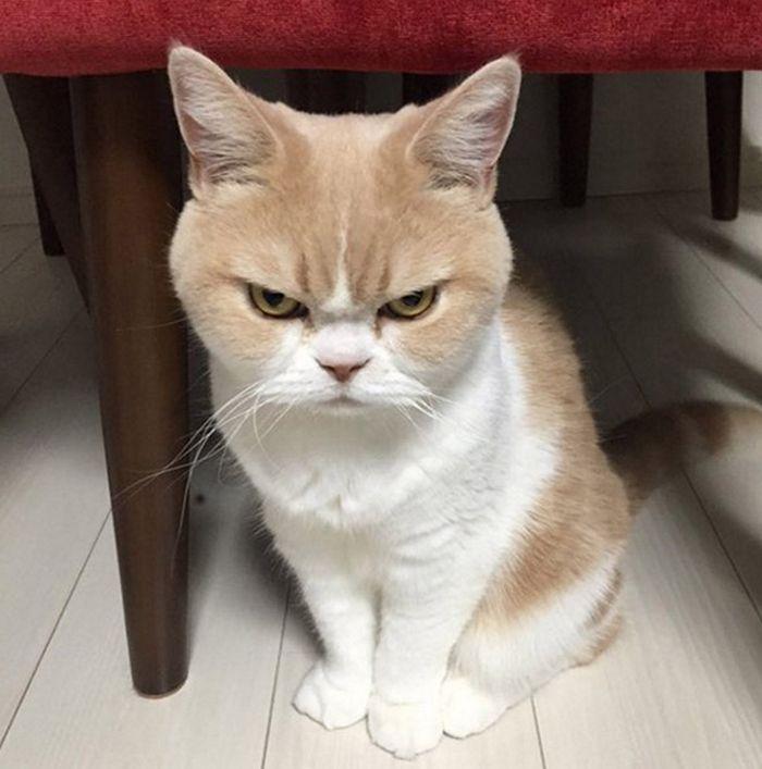 21 gatos que estão te julgando sem dó e nem piedade 3