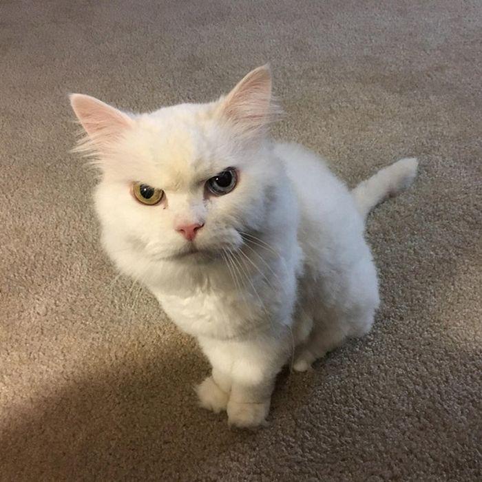 21 gatos que estão te julgando sem dó e nem piedade 4