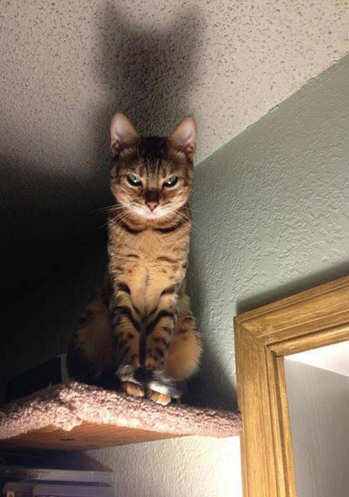21 gatos que estão te julgando sem dó e nem piedade 6