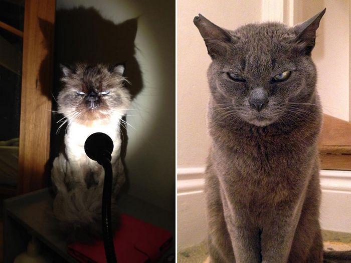 21 gatos que estão te julgando sem dó e nem piedade 7