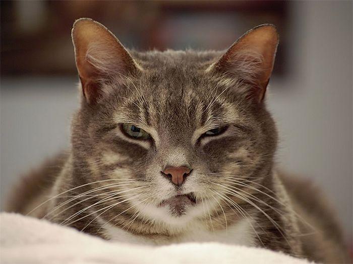 21 gatos que estão te julgando sem dó e nem piedade 9