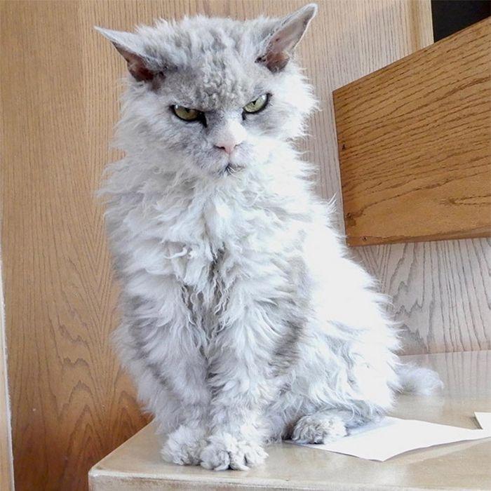 21 gatos que estão te julgando sem dó e nem piedade 11