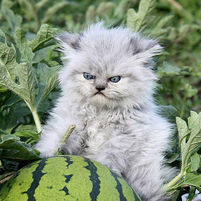 21 gatos que estão te julgando sem dó e nem piedade 12