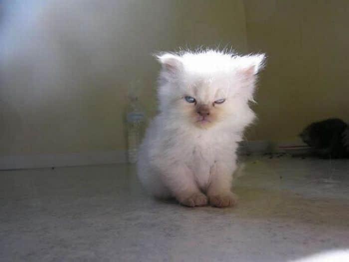 21 gatos que estão te julgando sem dó e nem piedade 13
