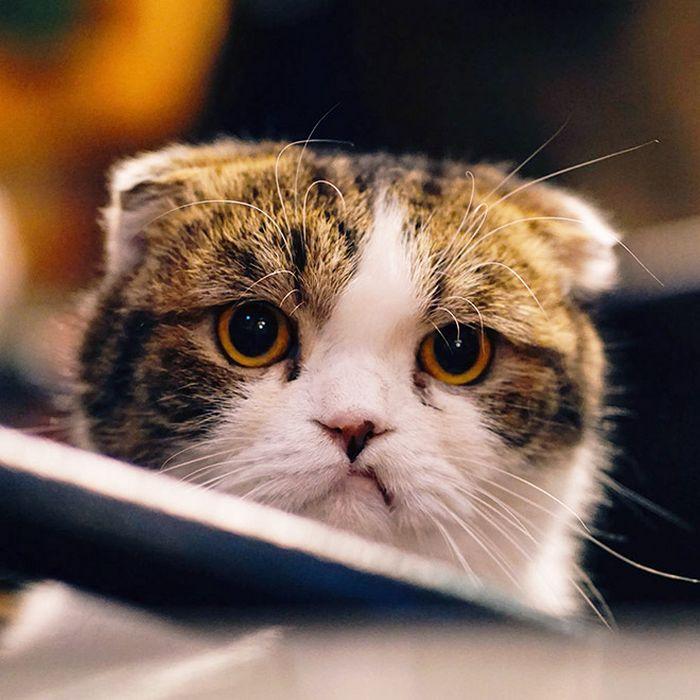 21 gatos que estão te julgando sem dó e nem piedade 15