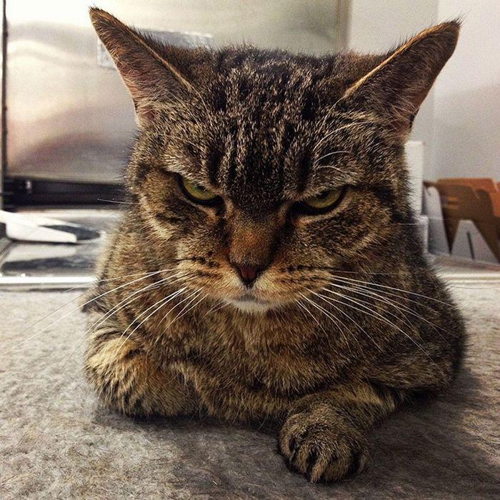 21 gatos que estão te julgando sem dó e nem piedade 17