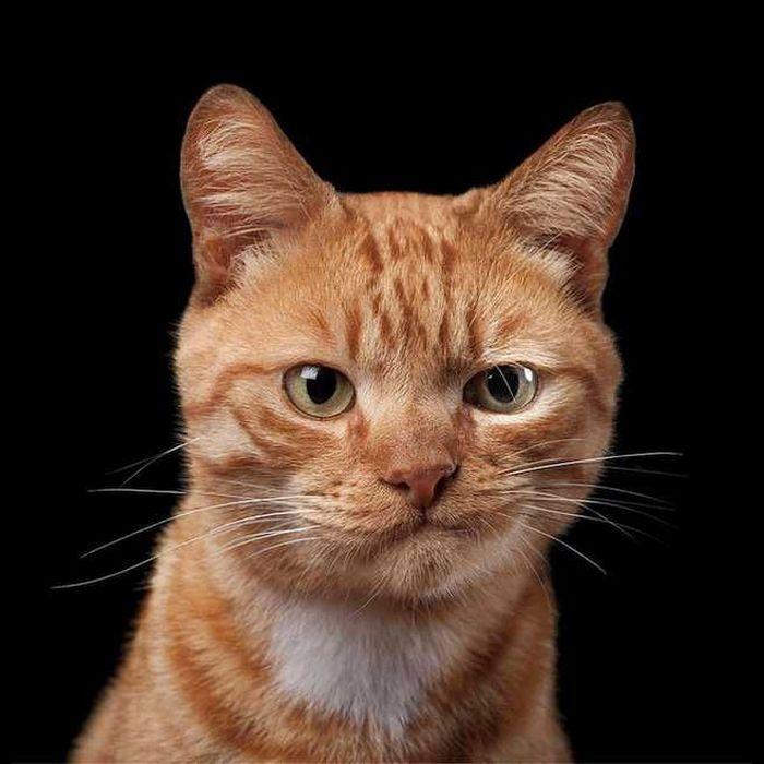 21 gatos que estão te julgando sem dó e nem piedade 18