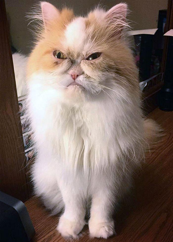 21 gatos que estão te julgando sem dó e nem piedade 21