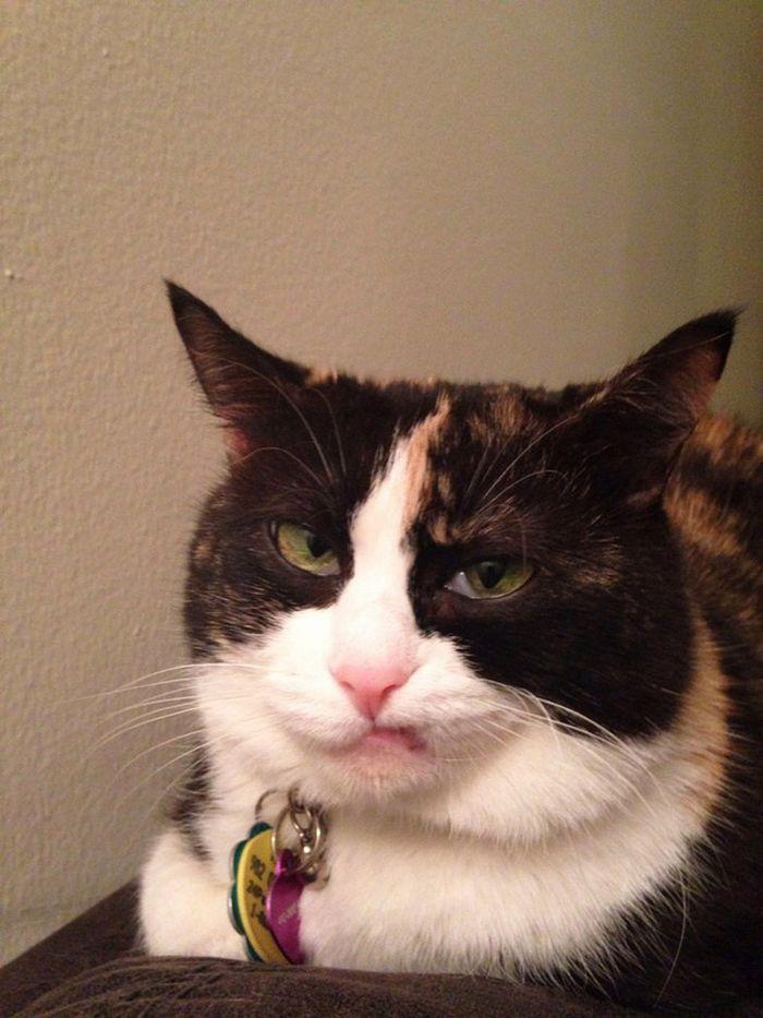 21 gatos que estão te julgando sem dó e nem piedade 22