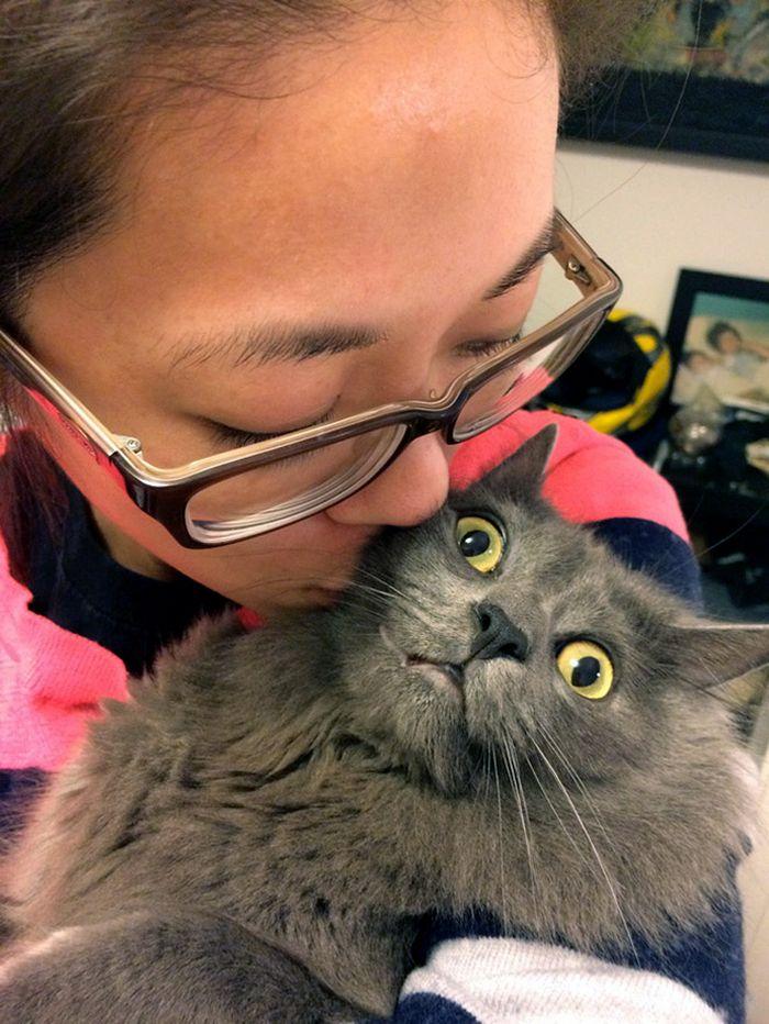 Gatos que odeiam estar em selfies com seus humanos (21 fotos) 5