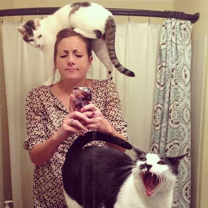 Gatos que odeiam estar em selfies com seus humanos (21 fotos) 19
