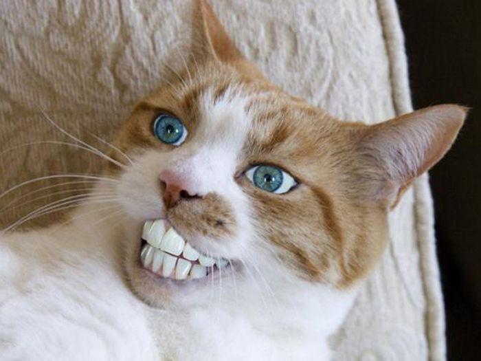 24 animais com bocas humanas 7