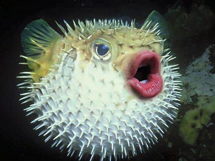 24 animais com bocas humanas 11