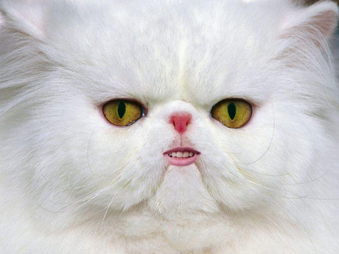 24 animais com bocas humanas 12