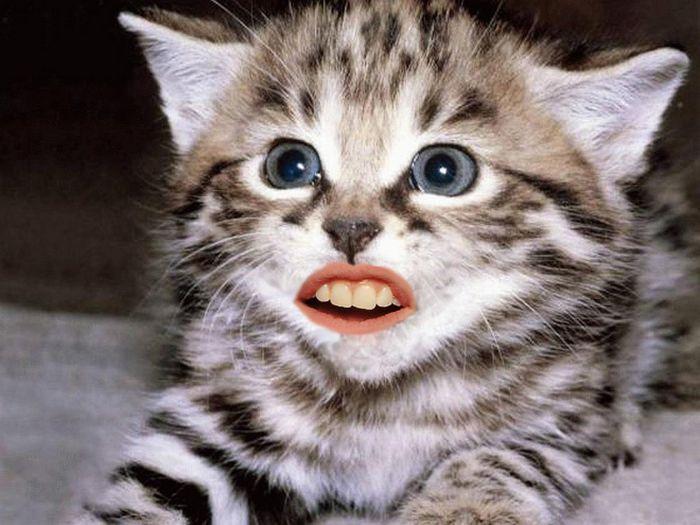 24 animais com bocas humanas 13