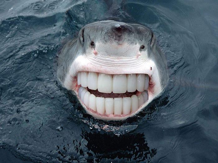 24 animais com bocas humanas 15
