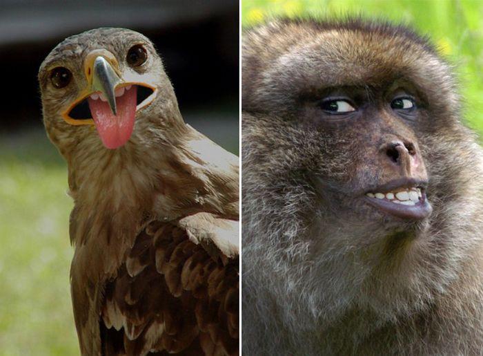 24 animais com bocas humanas 18