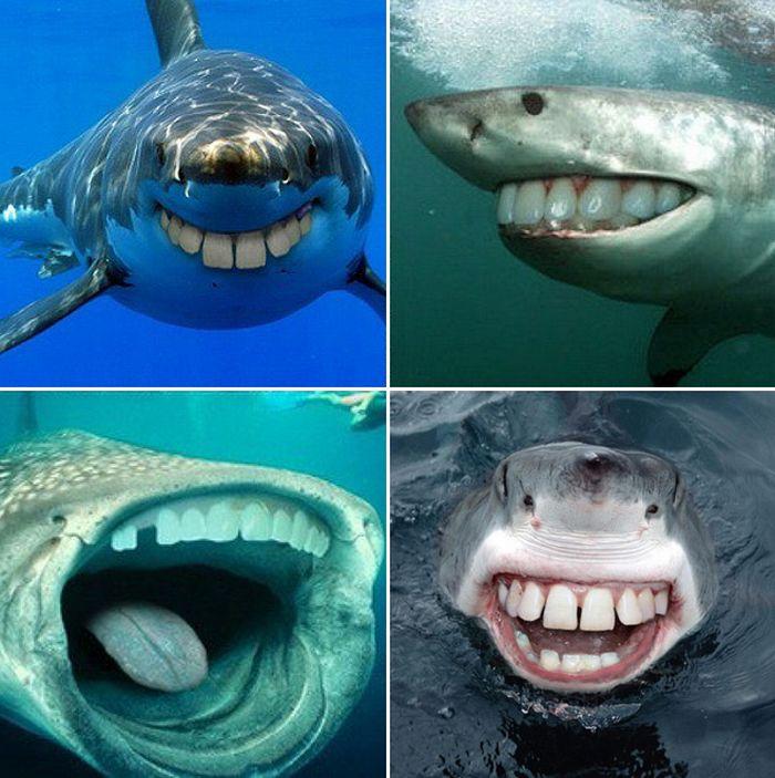 24 animais com bocas humanas 21