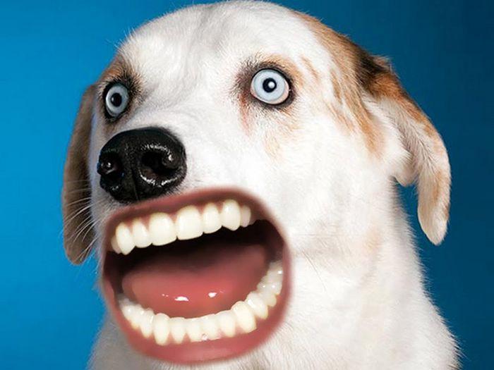 24 animais com bocas humanas 24