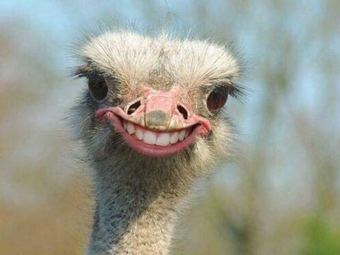 24 animais com bocas humanas 26