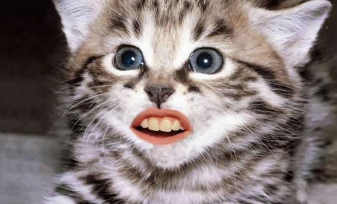 24 animais com bocas humanas 1