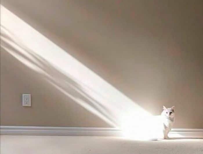 20 fatos peculiaridades dos gatos que você não sabia 3