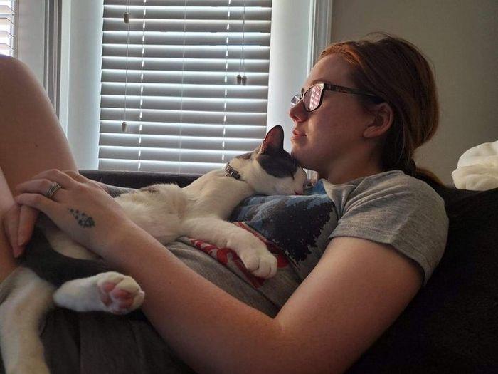 20 fatos peculiaridades dos gatos que você não sabia 5