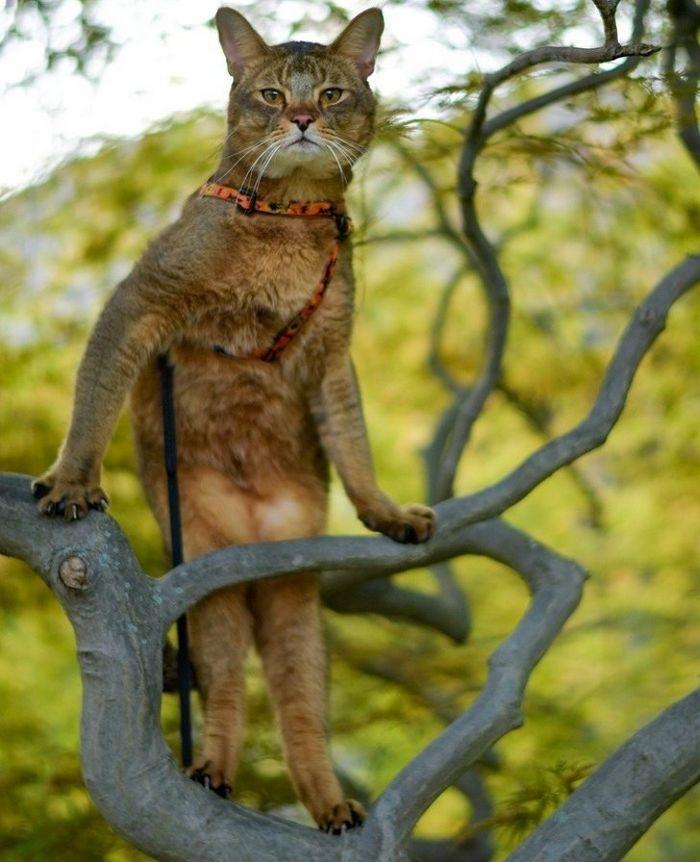 20 fatos peculiaridades dos gatos que você não sabia 11