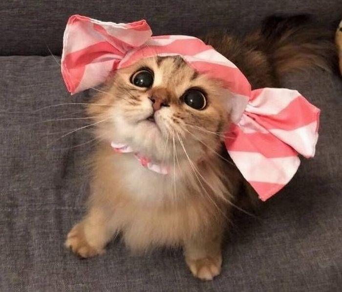 20 fatos peculiaridades dos gatos que você não sabia 13